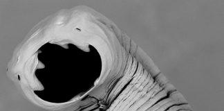 Paragen Bio, a 6 million dollar startup that fights hookworms